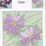 September's Aster